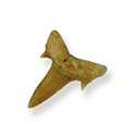 Fossil Shark Teeth 3/4""