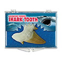 Genuine Fossil - Shark Tooth Educational Box