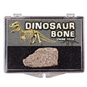 Dinosaur Bone Natural Educational Box