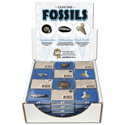 Fossil Assortment Display Pack 4