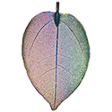 Leaf Assorted Colors Necklace - Silver