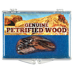 Petrified Wood Educational Box