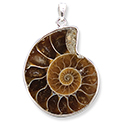 Ammonite Pendant Necklace - Silver